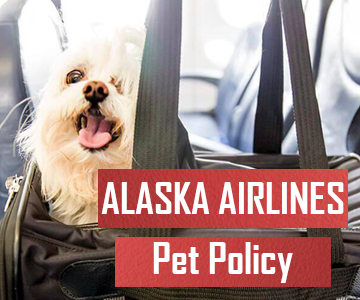 Major Things About Alaska Airlines Pet Policy